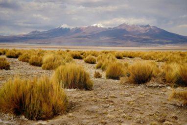 desarrollo plantas desierto