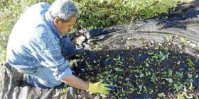 Proyecto maqui sustentable